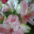 «Букеты весенних нежных цветов». Мои увлечения