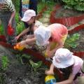 Деятельность детей летом (из опыта работы)