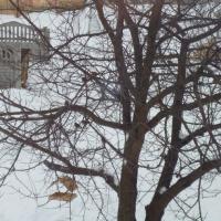 Фотоотчет о проведении акции «Покормите птиц зимой»