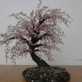 Мое хобби— изготовление деревьев из бисера