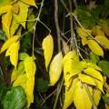 «Сказки осенних листьев». Поделки из природного материала