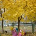 Экскурсия по территории детского сада. Наблюдение за осенними листьями.
