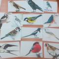 Дидактическая игра для детей старшего дошкольного возраста «Отгадай, что за птица?»