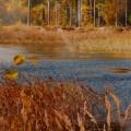 «Встречаем осень». Фотозарисовки