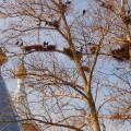 Конспект прогулки «Наблюдение за птицами весной»
