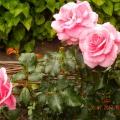 Фотозарисовка «В мире цветов мне тепло и прохладно» (часть вторая)