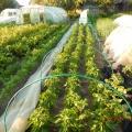 Фоторепортаж «Есть у нас свой огород, много там всего растёт»