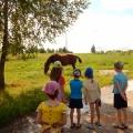 Конспект прогулки «Наблюдение за лошадью»