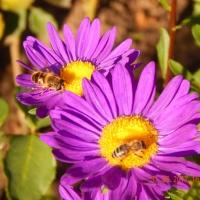 Формирование экологических знаний. Конспект познавательной прогулки «Наблюдение за насекомыми осенью»