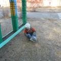 День труда в детском саду (фотоотчёт)