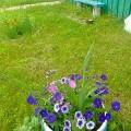 Цветы моё хобби!