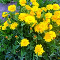 Фотозарисовка «Цветущий май»