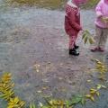 Узоры из осенних листьев