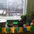 Фототчет «Огород на окне».