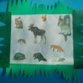 Проект «Дикие животные»