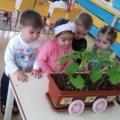 Как прорастают семена фасоли опыт по дням