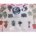 Стенгазета о комнатных растениях