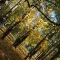 Ознакомление с окружающим миром. Осенняя прогулка (фотоотчет)