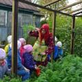 Конспект НОД на свежем воздухе на тему «Овощи и фрукты» («В гостях у бабушки Нюры»)