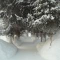 Зимняя сказка. Фотозарисовка