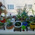 Оформление детского сада. Огород на окне «В огороде Мухи-Цокотухи»