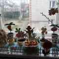 «Огород на окне» в средней группе