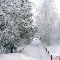 «Зимушка-зима. Деревья». Календарно-тематическое планирование ОП в средней группе по программе «От рождения до школы»