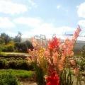 Фотозарисовка «Цветы в моем саду»