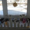 Фотоотчёт о конкурсе «Огород на окне» в средней группе