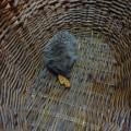 Наблюдения в природе «Крошка ёжик. Удивительное рядом» (фотоотчёт)