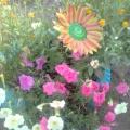 Фотозарисовка «Цветы мои цветочки»