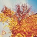 Фотоотчет: «Сказочная осень»