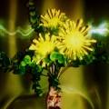 Мастер-класс «Одуванчики-цветы, небывалой красоты»