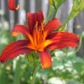 Цветы в моем саду!
