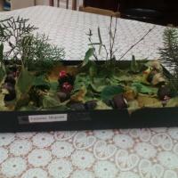 Фотоотчет о конкурсе поделок из природного материала для родителей «Осень золотая»