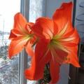 Фотовыставка «Расцвели у нас цветы небывалой красоты»