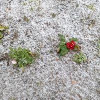 Фотоотчет «Наблюдение за первым снегом»