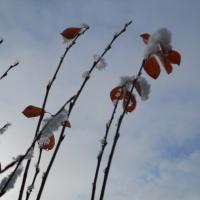 Фоторепортаж «Первый снег»