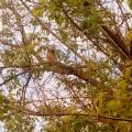 Конспект прогулки «наблюдение за совой» для детей средней группы