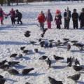 Целевая прогулка в парк. Акция «Покормите голубей»
