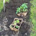 Конспект итогового занятия в подготовительной к школе группе «Мы посадим огород, в детском саду пусть он растёт»