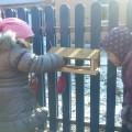 Конспект занятия в старшей группе детского сада «Покормите птиц зимой»