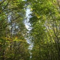 Фотоотчет «В осеннем лесу»