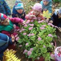 Консультация для родителей «Экологическое воспитание дошкольников»