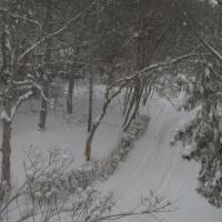 Фотоотчёт «А пришла ли Весна?»