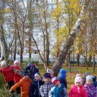 Экологическая сказка для детей дошкольного возраста «Зачем растут берёзы»