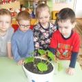 Исследовательский проект «Выращивание огурцов на подоконнике» (фотоотчет)