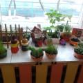 Детский экологический проект по организации труда дошкольника «Огород на окне»