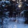 Прогулка по зимнему лесу. Фоторепортаж