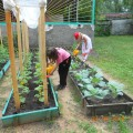 Фотоотчет «Огород в детском саду»